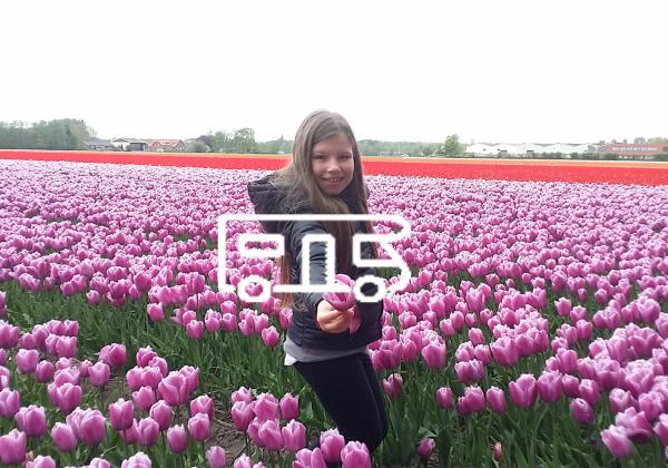 Olanda In Camper Pasqua 2020